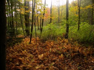 Fall in Canco Woods