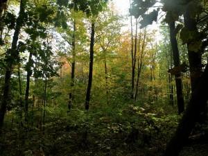 Save Canco Woods